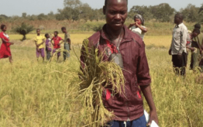 Blog: Improving market relations for young agripreneurs
